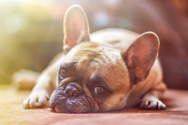 Czy ten pies może przestać kopać dziury w ogrodzie?