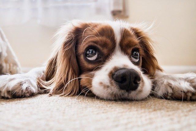 5 powodów, dla których lepiej mieć psa