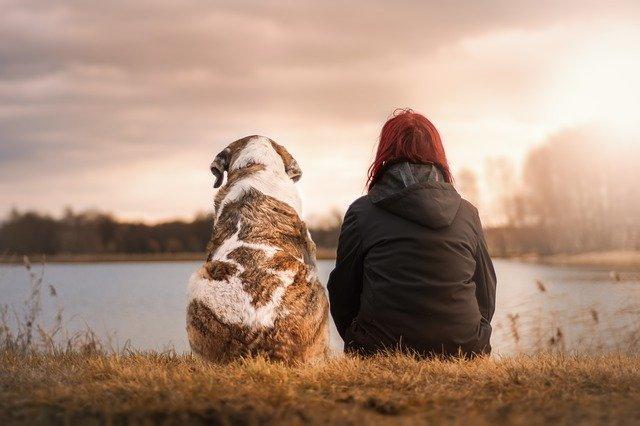 Pies – wierny przyjaciel, który dba o nasze zdrowie.