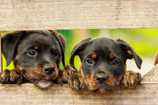 Piesek ze schroniska – 5 kroków do adopcji