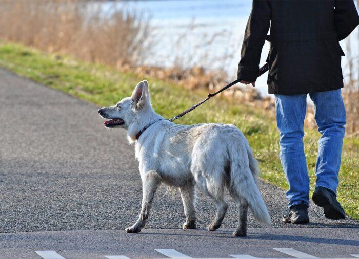Najlepsze akcesoria na spacer z psem