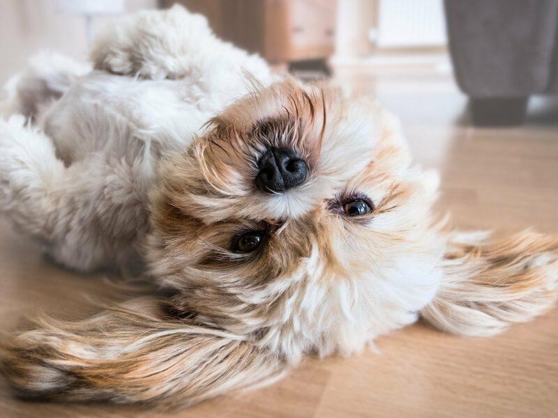Mokra karma monobiałkowa dla psa – jak może pomóc Twojemu pupilowi?